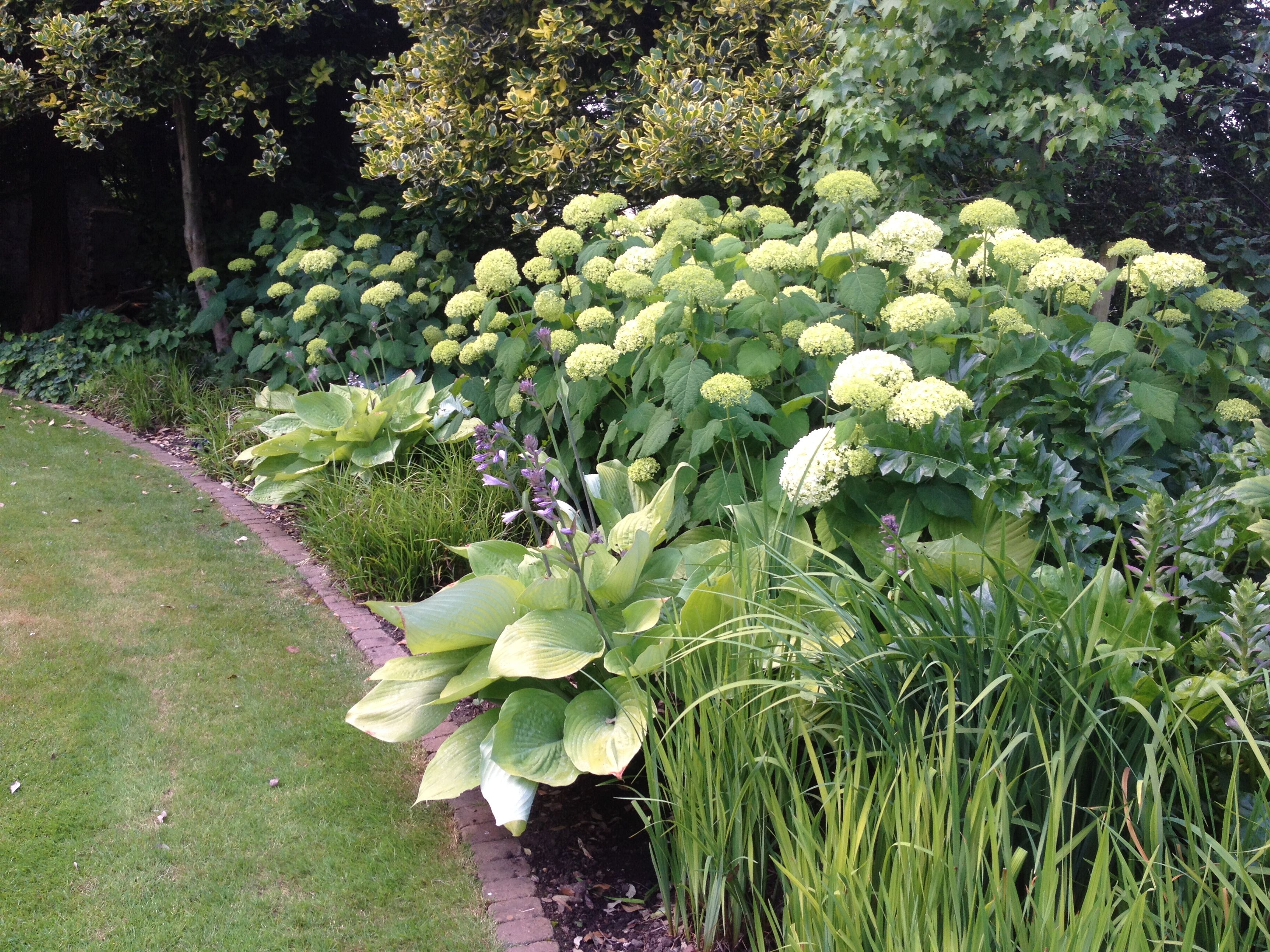 Hydrangea Anabelle With Hosta Sum And Substance And Iris Sibirica Hydrangea Landscaping Anabelle Hydrangea Shade Garden
