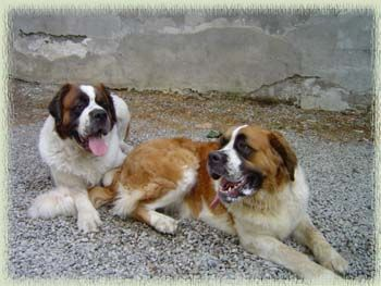 Susanna & Alfredo of Nottola in Montepulciano, Italy...talk about lucky dogs!