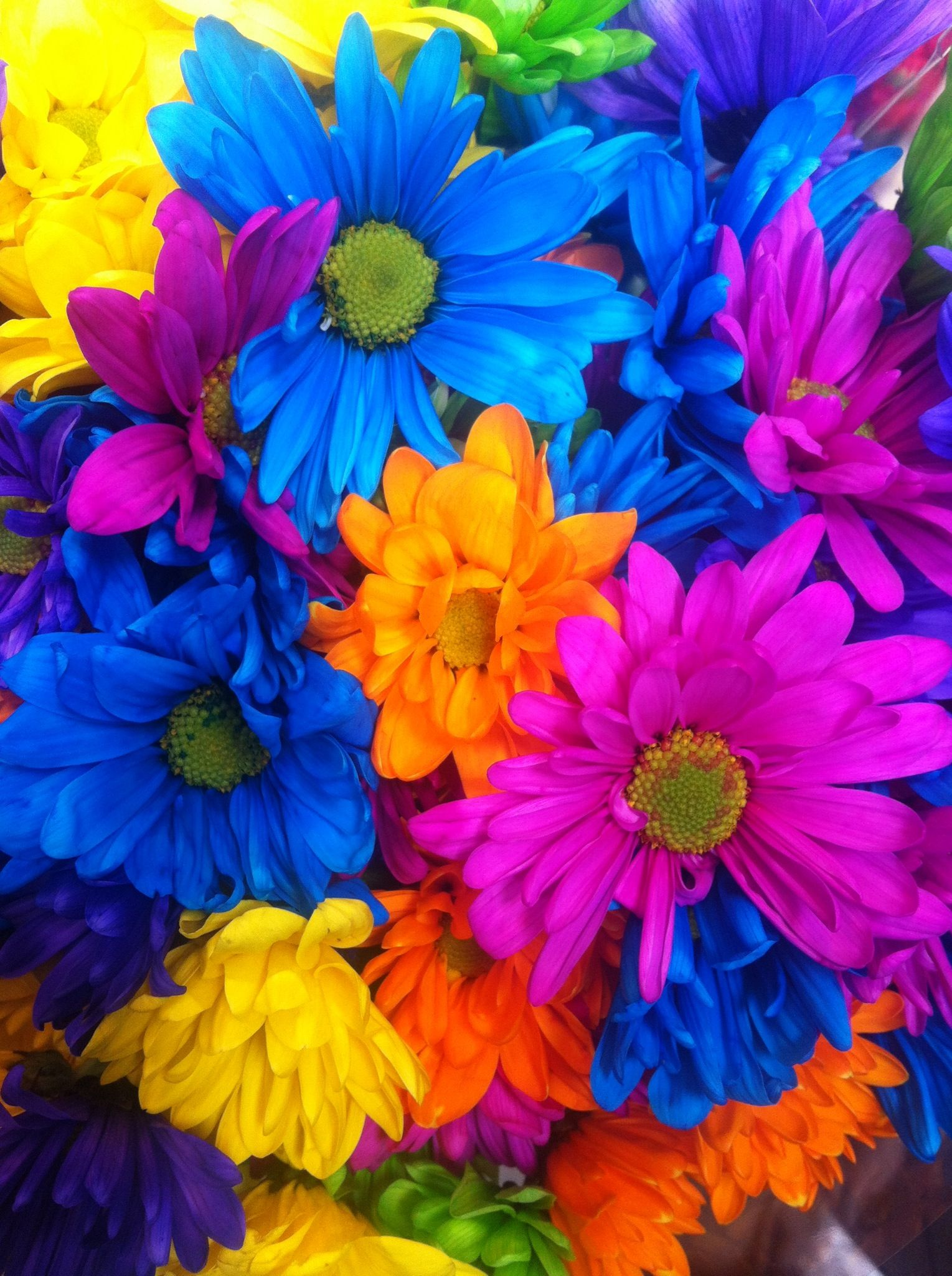 Rainbow Colors With Images Flowers Rainbow Colors Color