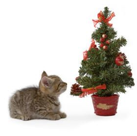 Page With Tips For Keeping Cats Out Of Christmas Trees