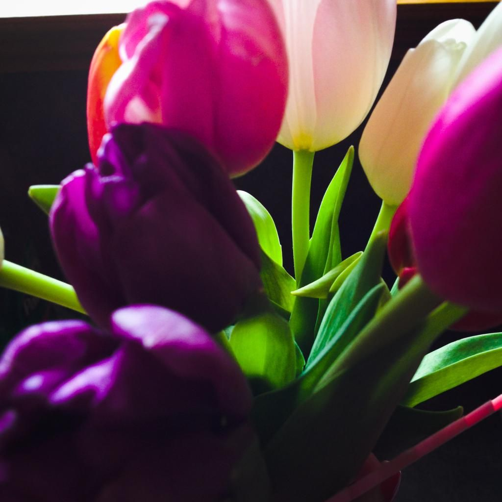 The Adventures of Kathryn: Just a Few Snaps #Tulips #PrettyFlowers #MothersDay