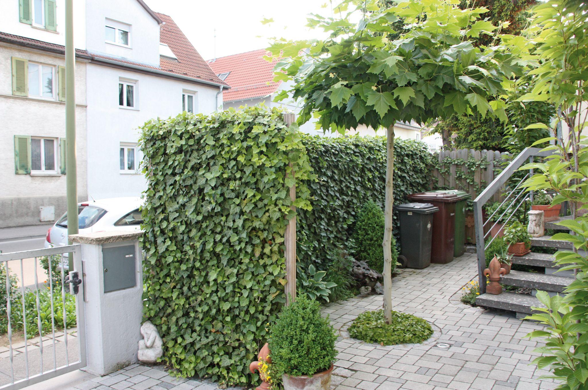 Bildergebnis Fur Hecke Laufender Meter Clematis Vorgarten