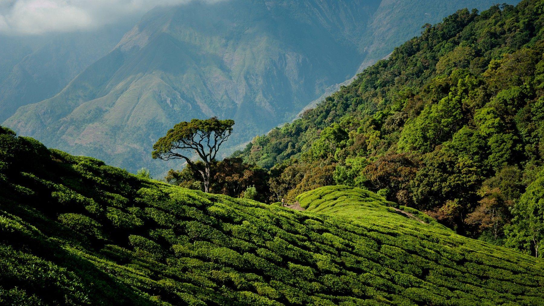 Tea plantations of Munnar, India in 2019 Amazon fire tv