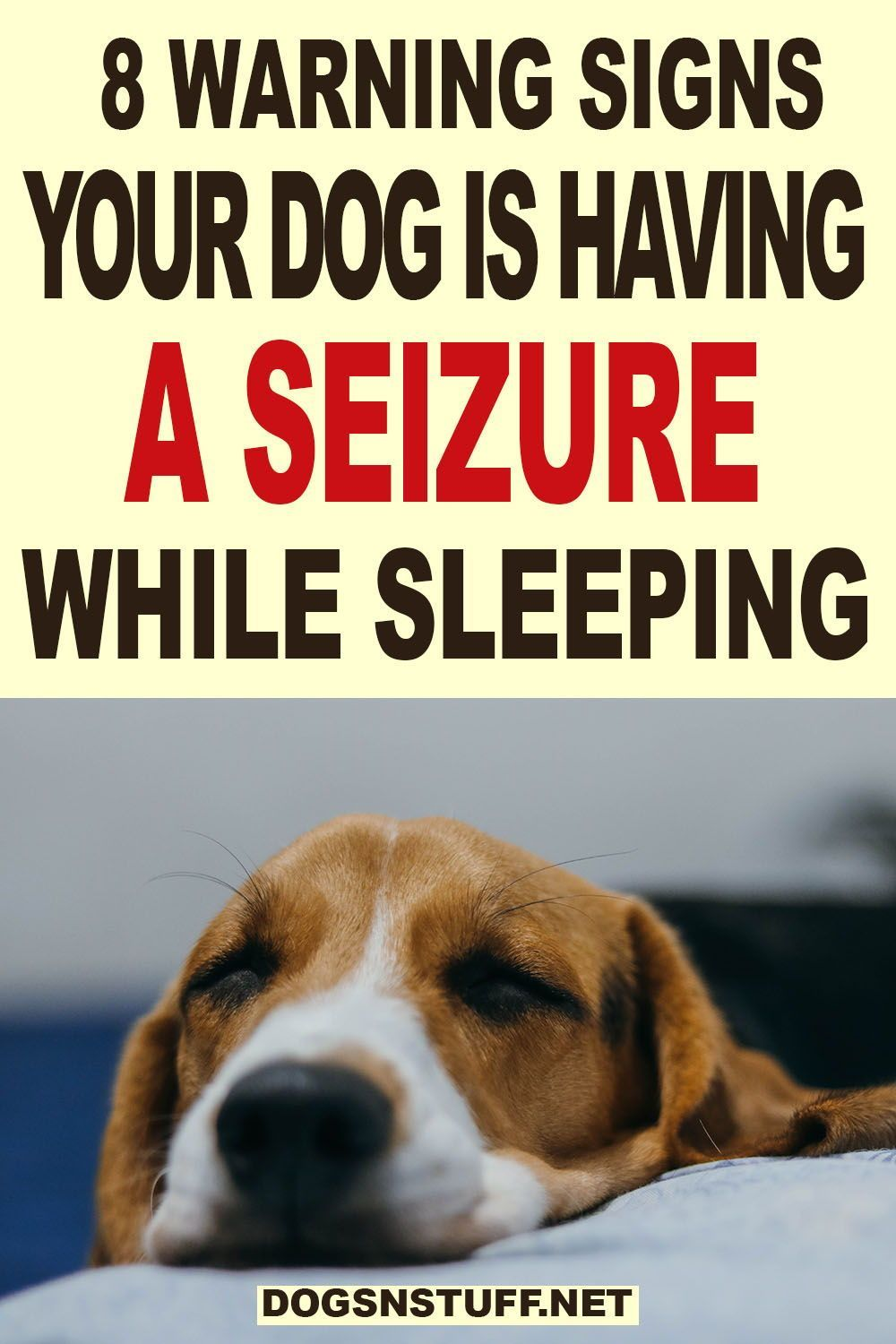 How To Tell If A Dog Is Having A Seizure While Sleeping 8 Warning Signs To Look Out For Dog Seizures Dogs Seizures