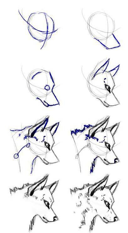 Photo of This is just the simplified process of drawing a wolf's head that I …