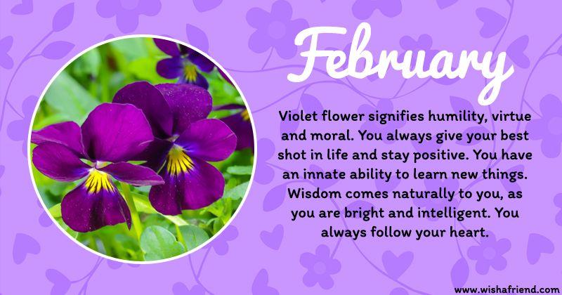 February Birth Flower February Birth Flowers Birth Flowers Birth Month Flowers