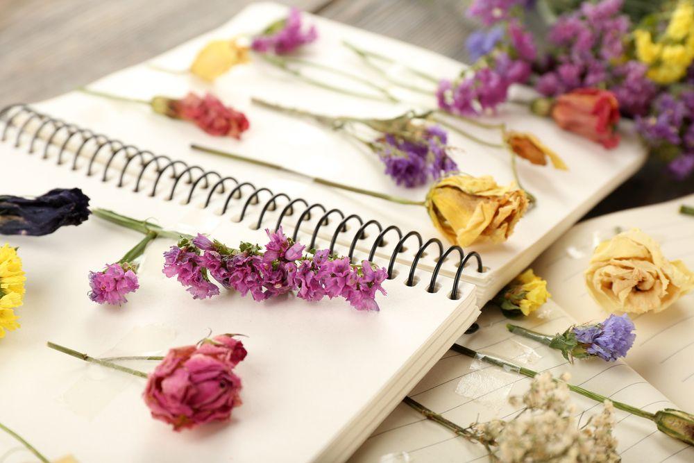Comment Faire Secher Des Fleurs Pour Scrapbooking Diy Faire Secher Des Fleurs Fleurs Sechees Scrapbooking Fleur