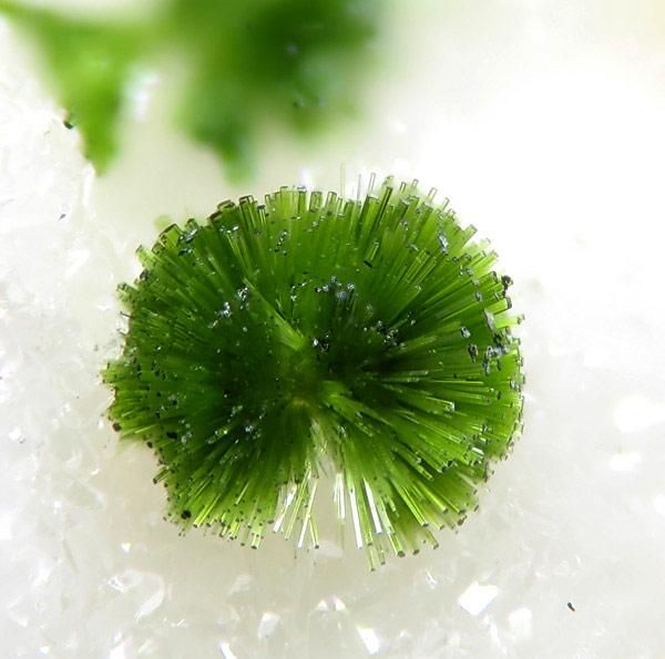 Olivenite from Clara Mine, Black Forest, Germany