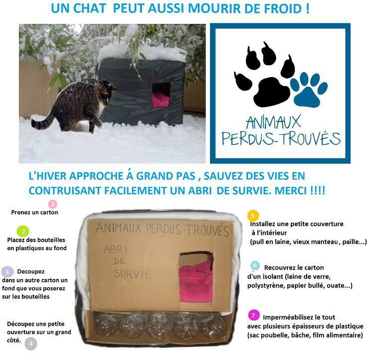Abri Chat Hiver Idees