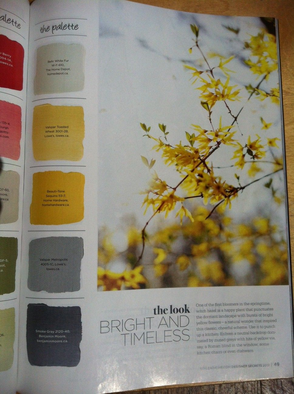 Bright And Warm, Analogous Colour Scheme With Grey For