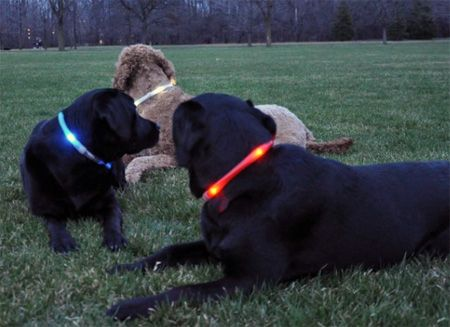 The easy way to see your dog in the dark   Practical Motorhome