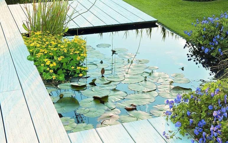 Wasser Im Garten In Grosser Auswahl Bei Obi Entdecken Gartenteich Wasser Im Garten Aussenteiche