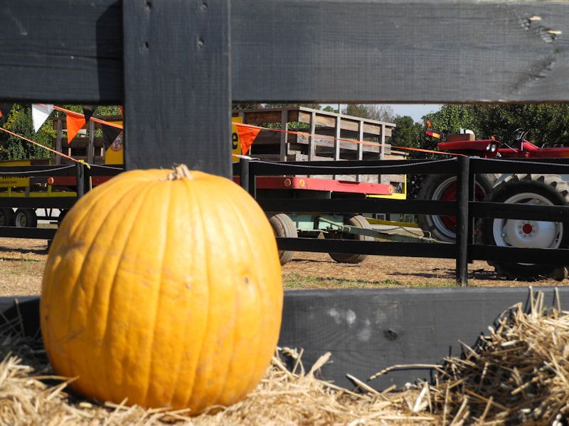 Pumpkins and Hayrides!