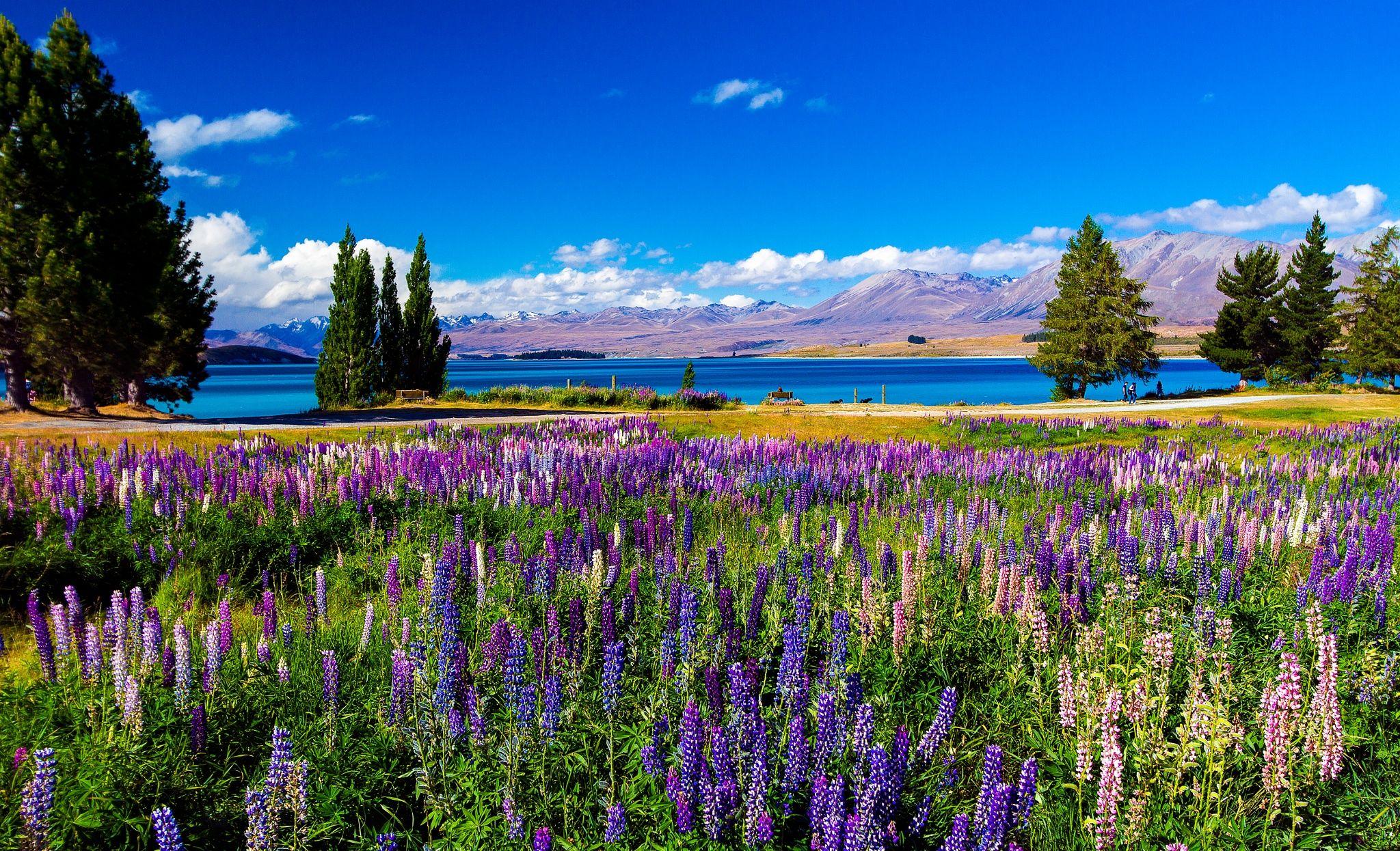 Lake Tekapo by Susan Blick on 500px Lake tekapo, Scenic