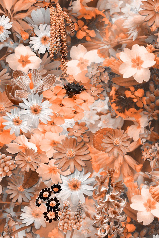 Flower Wallpaper Hd Free Download Flower Wallpaper Cute Flower Wallpaper Best Flower Wallpaper Beautiful Flowers Wallpapers