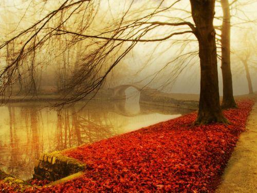 Autumn Mist, Sakura, Japan