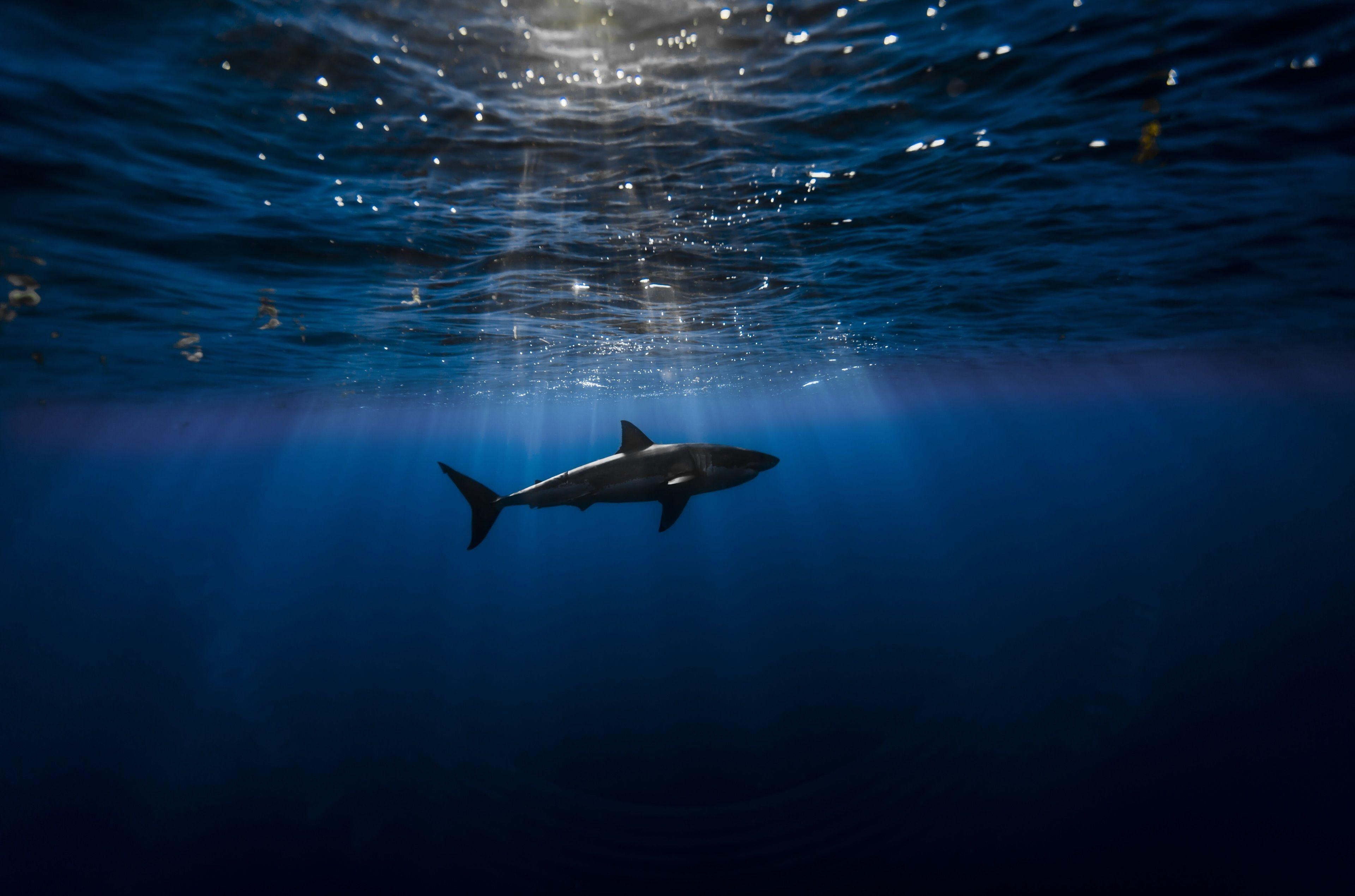 3840x2540 Shark 4k Pc Wallpaper Hd Quality Underwater Wallpaper Ocean Underwater Great White Shark