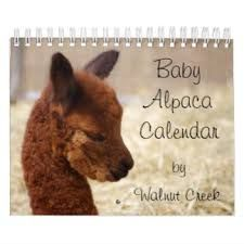 Image result for pictures of baby alpacas to pin