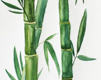 Bildergebnis Fur Bambus Malen Aquarell Allerlei Art Und Bamboo