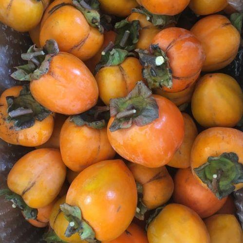 渋柿(干し柿用) 四つ溝柿
