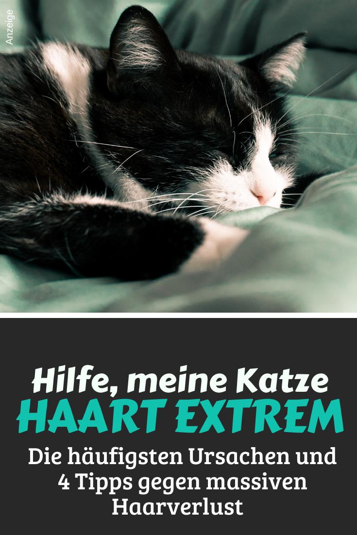 Katzenhaare Katze Haare Tipps Katzen Katzen Haarausfall Katzen Korpersprache