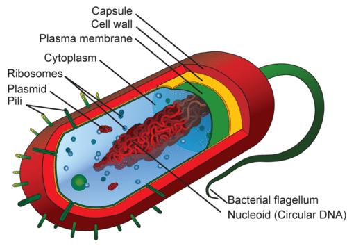 Prokaryotic And Eukaryotic Cells Read Biology Prokaryotic Cell Eukaryotic Cell Cell Parts