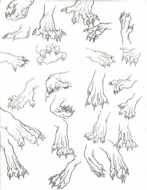 Animal Paws Claws How To Draw Manga Anime Dragon Drawing Sketches Anatomy Reference