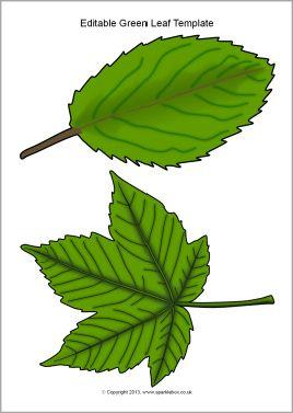 Exceptional Editable Green Leaf Templates (SB10010)   SparkleBox Regarding Editable Leaf Template