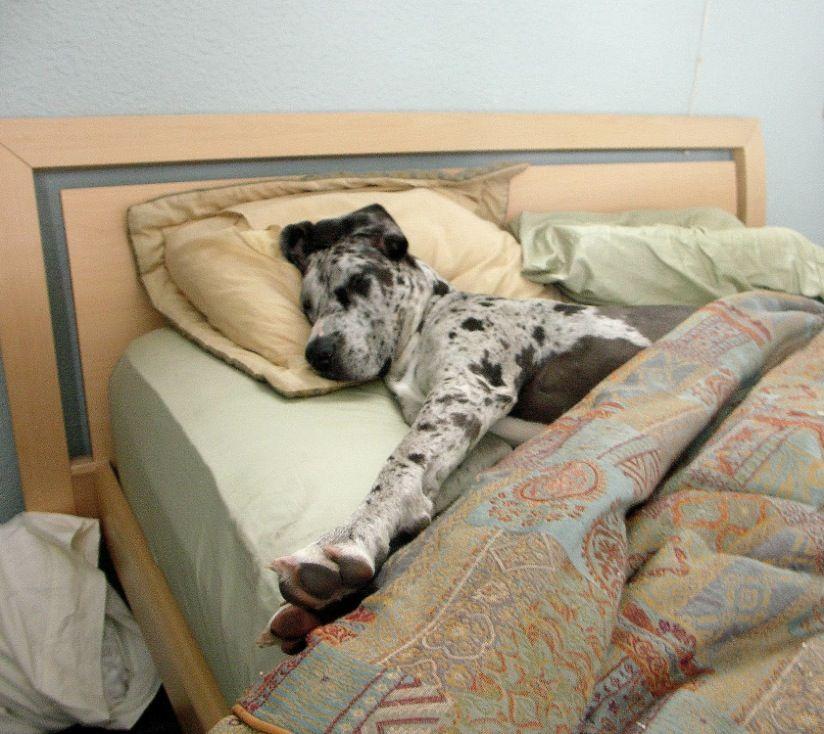 Image result for site:pinterest.com dog sleeping in bed