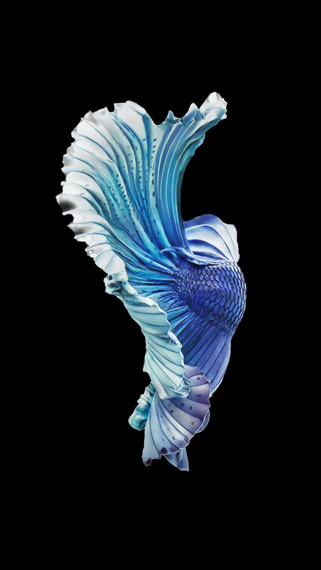 Pin by russia on wallpapers iphone for Betta fish live wallpaper