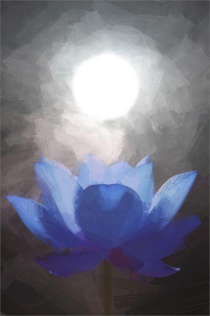 blue lotus flower oil paintings   lotus flower oil