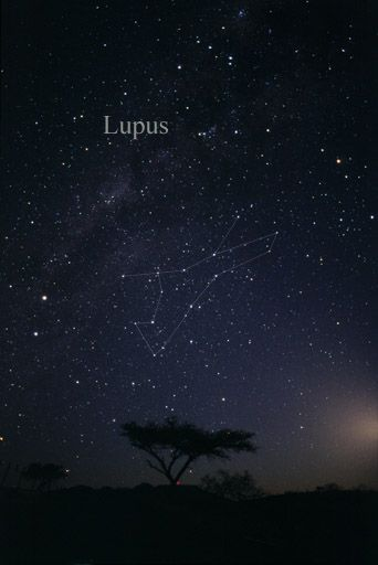 cf28b34a6 Constellation Lupus - Lupus (constellation) - Wikipedia, the free  encyclopedia