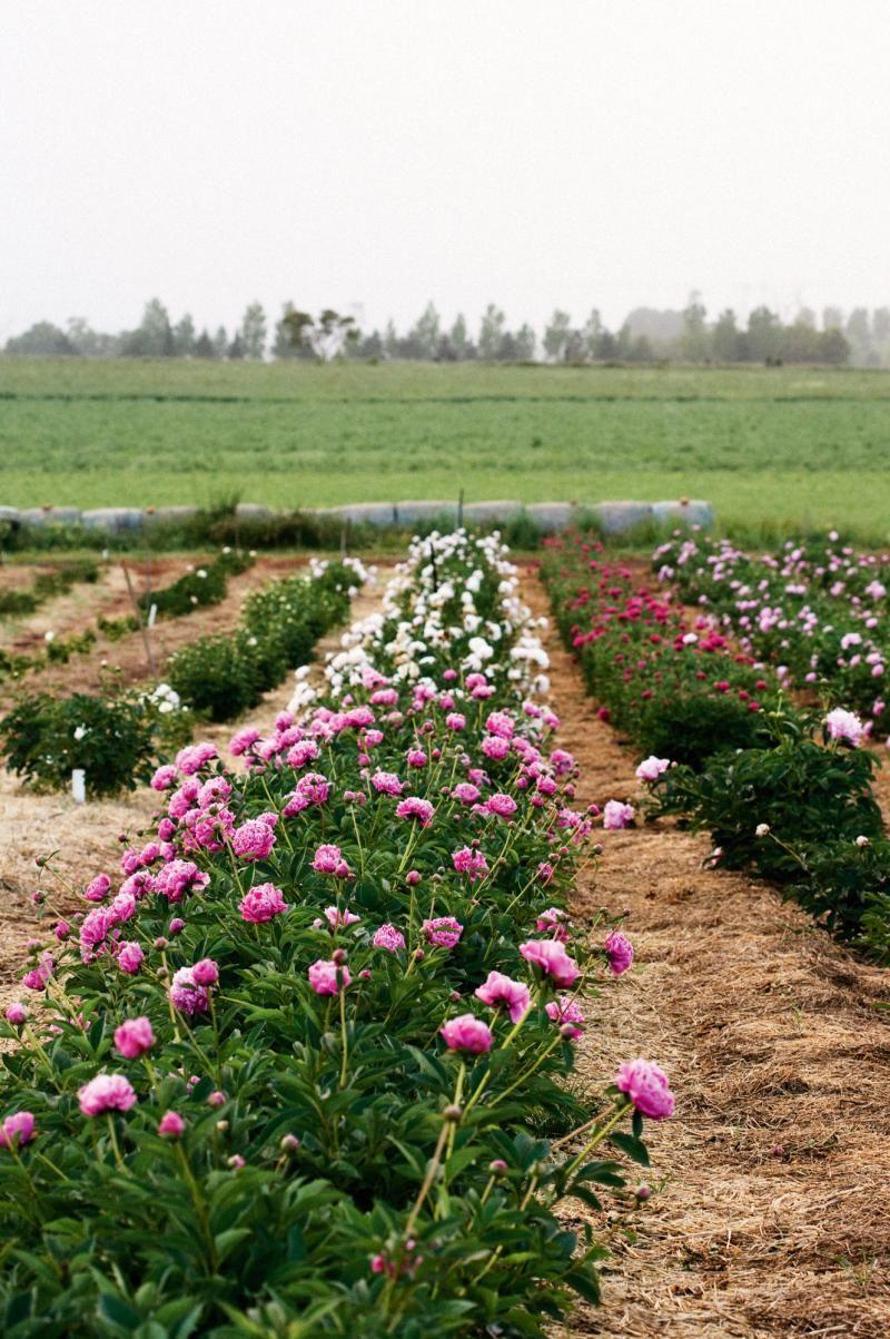 Pin On Flower Farming