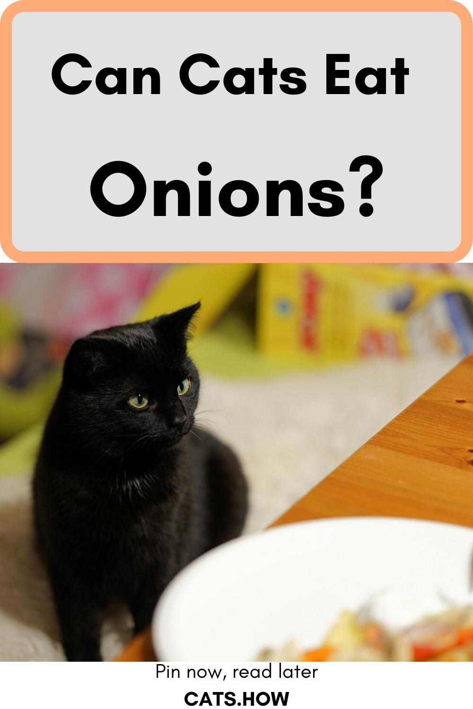 Can Cats Eat Onions Cats Cat Health Healthy Cat