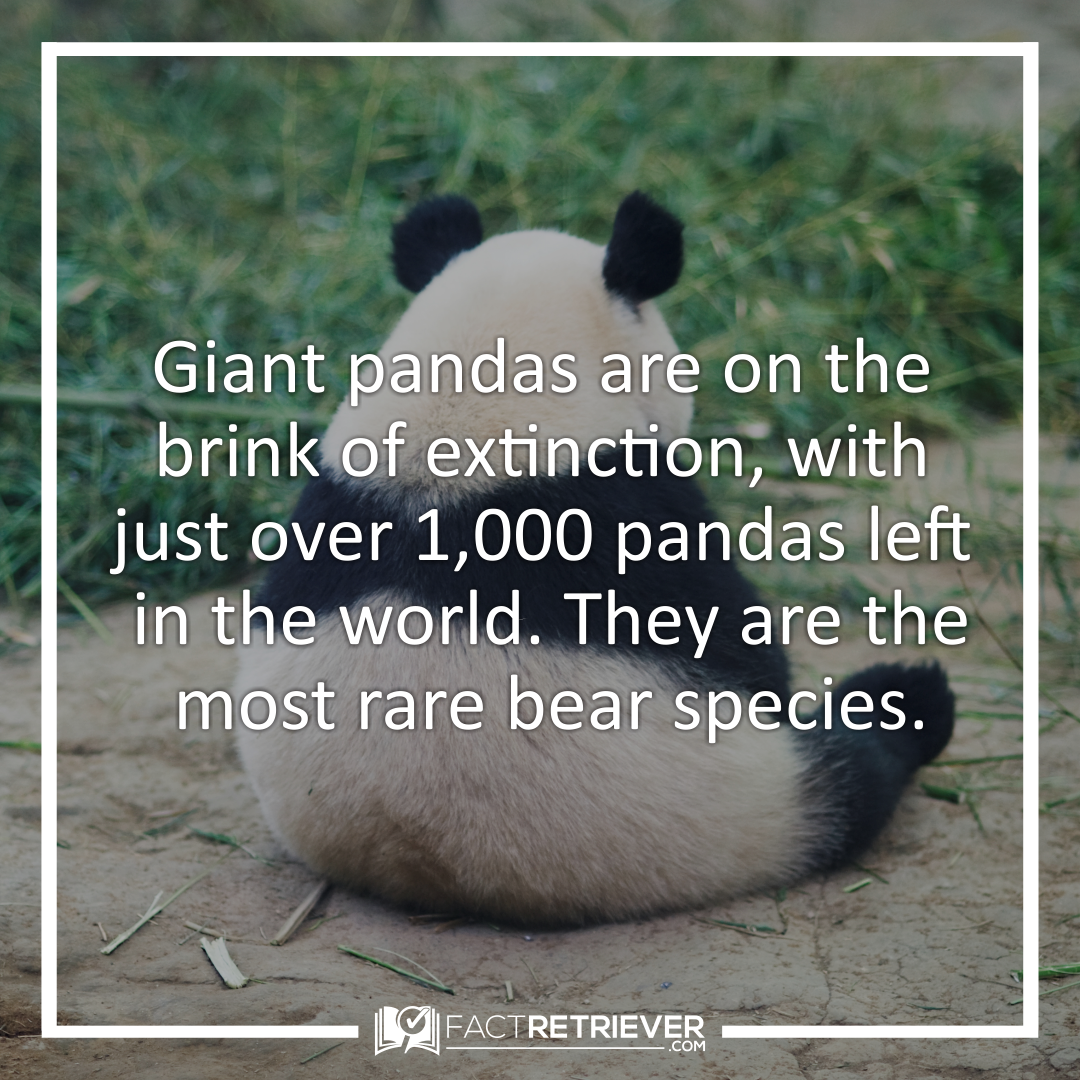 68 Cute Facts About Giant Pandas