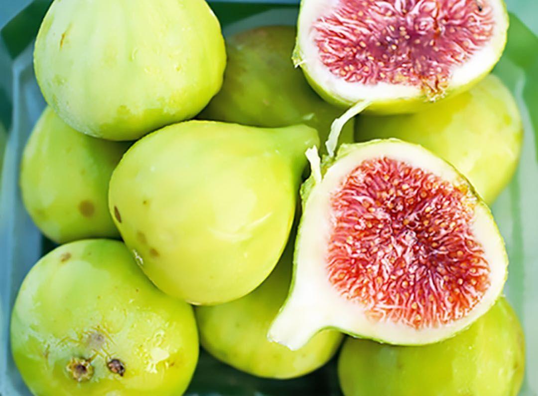 White Genoa Fig Tree Fig Varieties Fig Tree Fig Tree Types