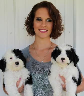 Home Raised Bernedoodle Goldendoodle And Sheepadoodle Puppies In Michigan Since 2004 Sheepadoodle Sheepadoodle Puppy Bernedoodle