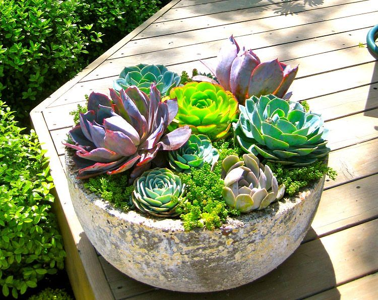 47 Succulent Planting Ideas With Tutorials With Images Succulents Succulents Garden Planting Succulents