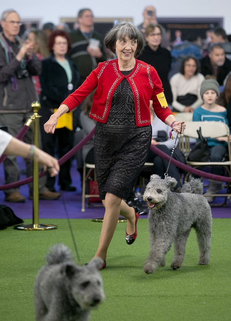 Westminster Dog Show 2019 Pugs And Yorkies And Bulldogs And