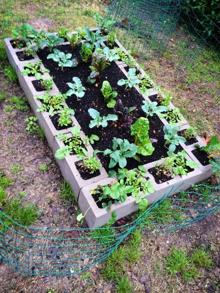 Vegetable garden CONTAINER GARDENS Pinterest - jardines navideos