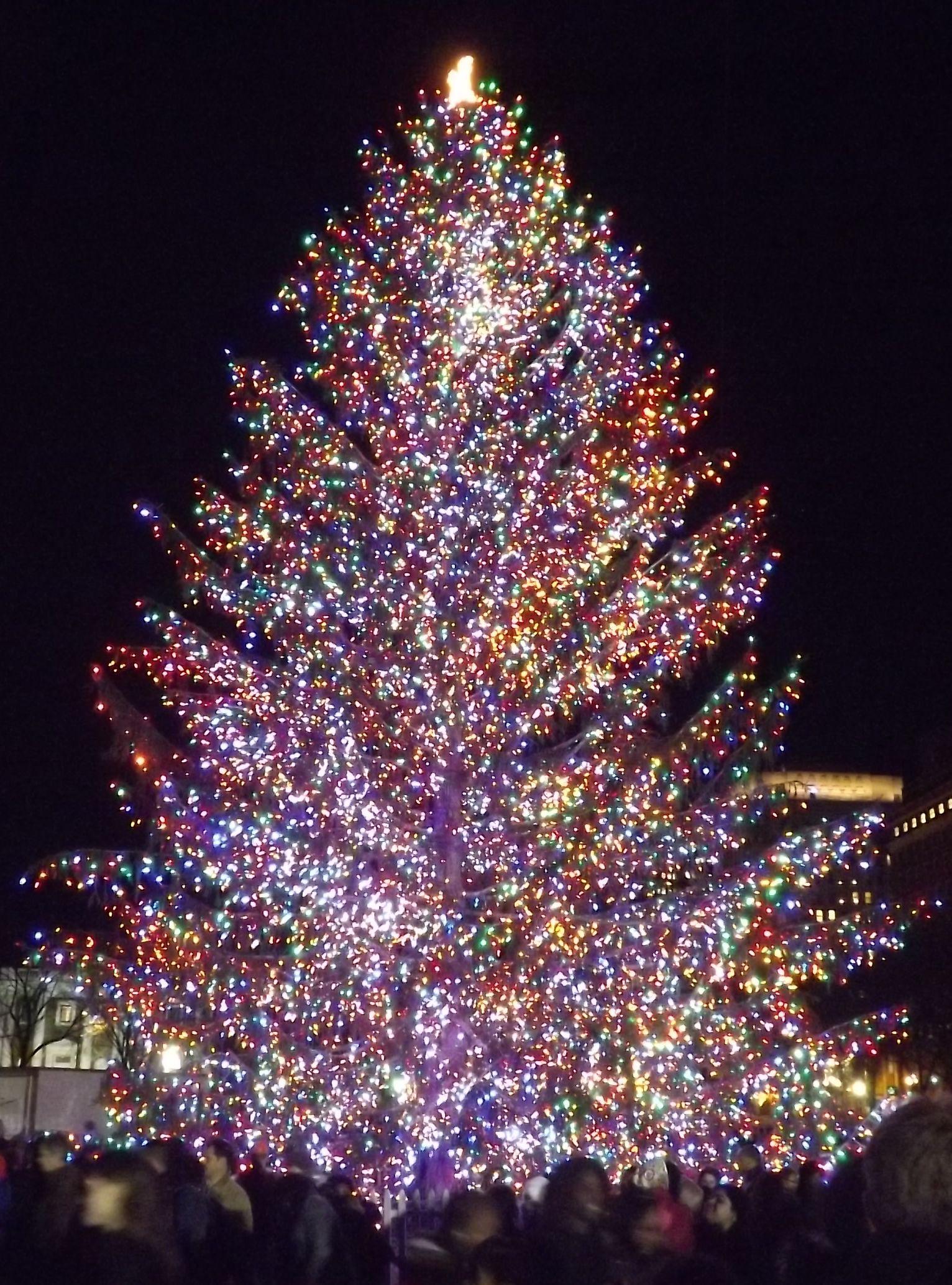 Außerhalb Tree Christmas Licht Ideen Outdoor Weihnachten Lampen ...