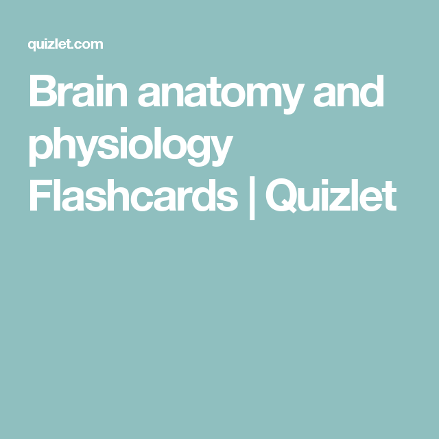 Brain anatomy and physiology Flashcards | Quizlet | Medical notes ...