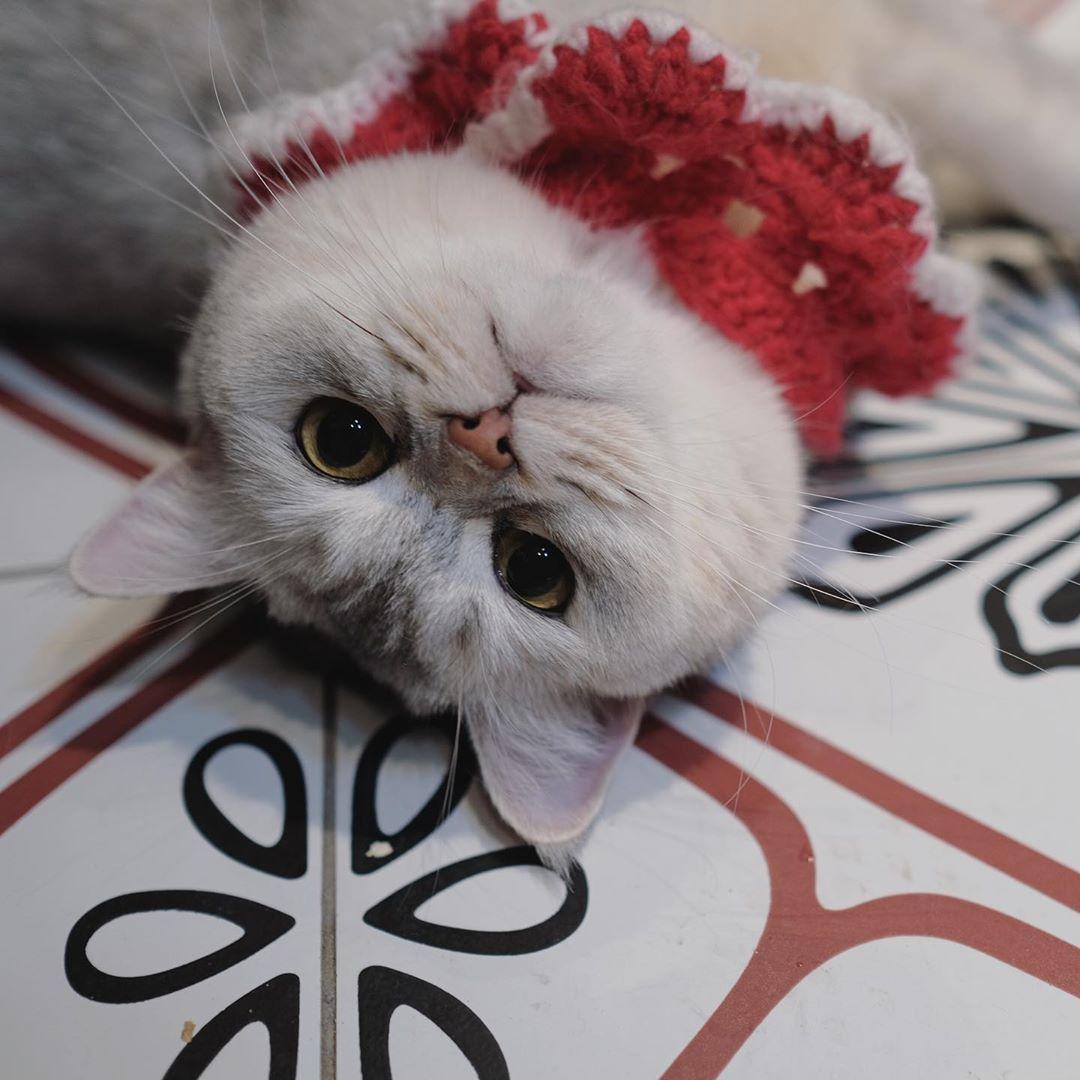 。 。 。 。 。 。 。 。  #catstagram #cat #cats #catsofinstagram #cats_of_instagram #catloversclub #catlover #catlovers #catoftheday #catsagram #cat_of_instagram #catsoftheworld #catslover #catselfie #pet #pets #petstagram #kawaii #lovely