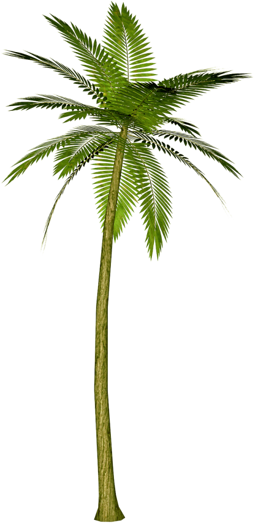 banana tree drawing png - photo #28