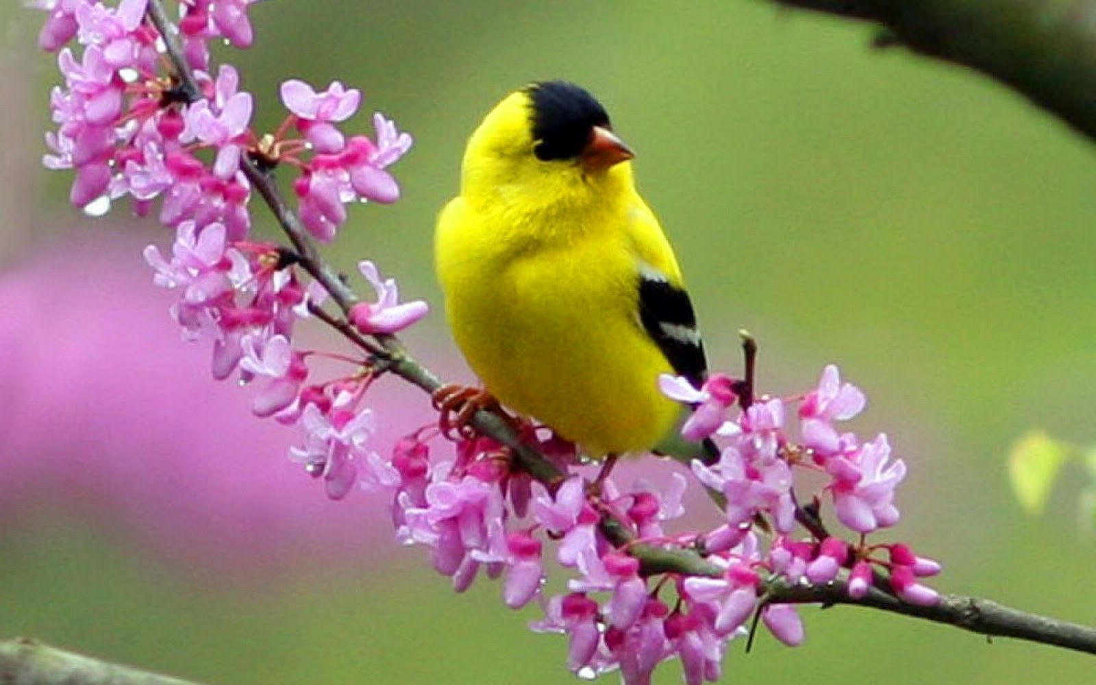 Beautiful Birds Wallpapers Free Download Beautiful Bird Wallpaper Cute Birds Beautiful Birds