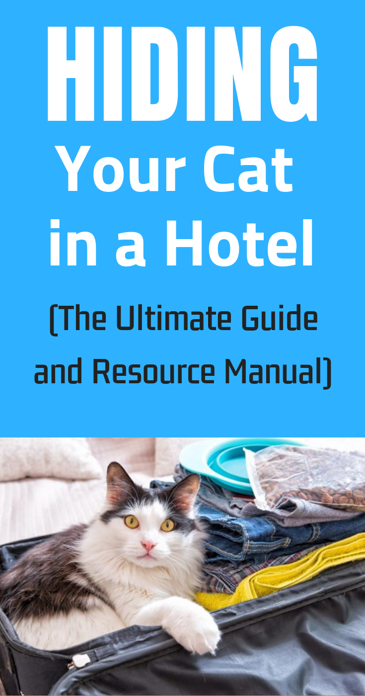 Hiding Your Cat In A Hotel The Ultimate Guide And Resource Manual Cat Travel Cats First Time Cat Owner