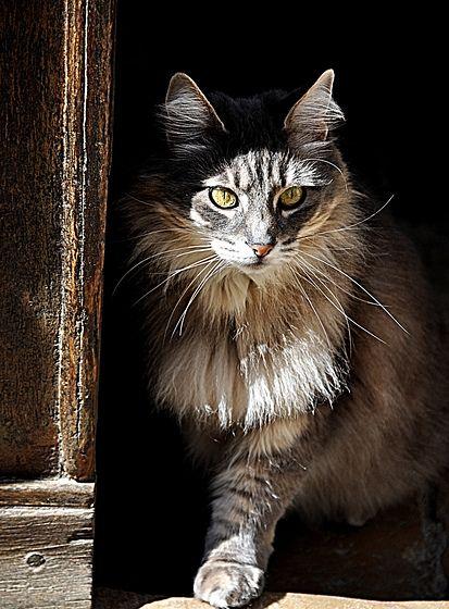 kittyLighting.