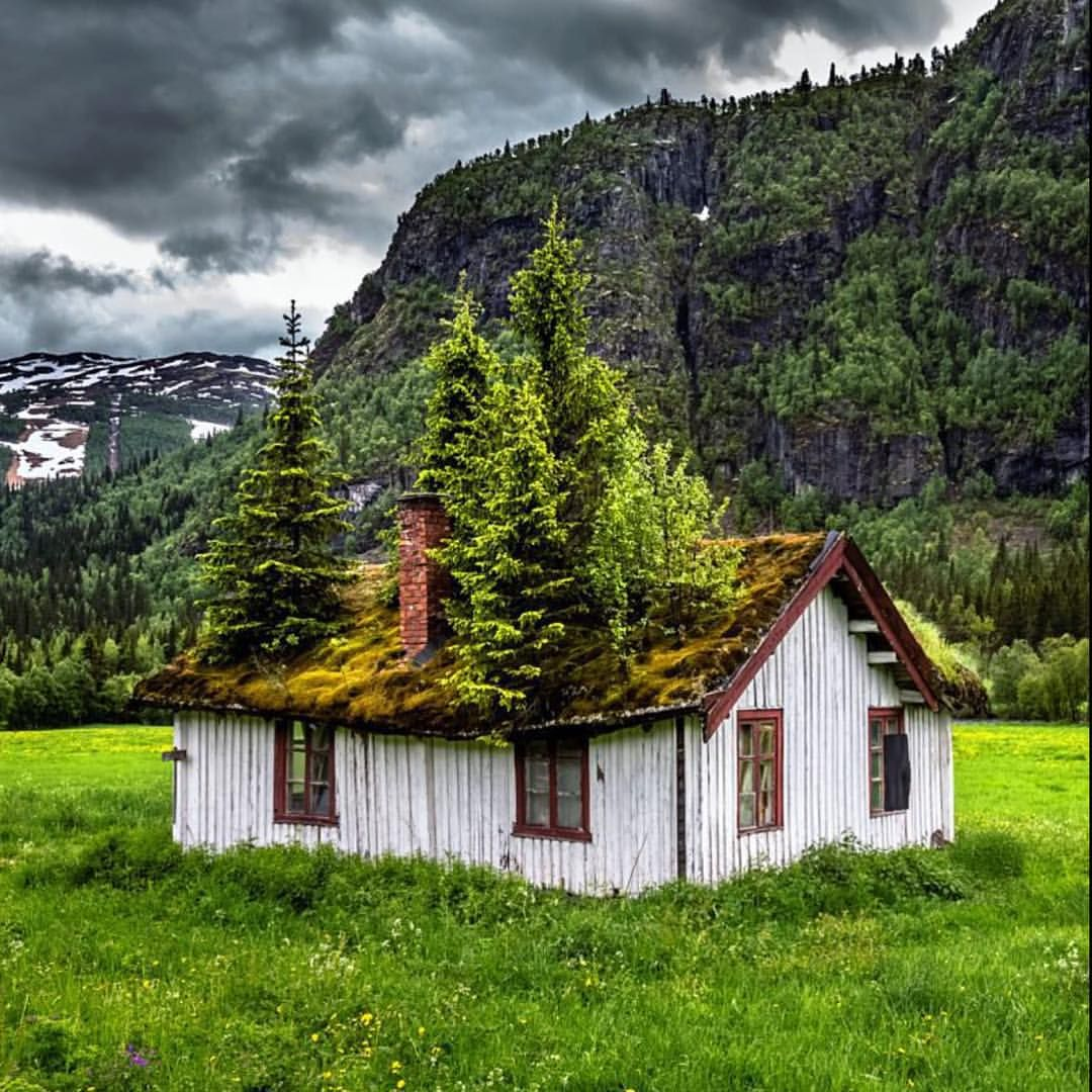 norway. look at those trees inside the house. is it normal in a