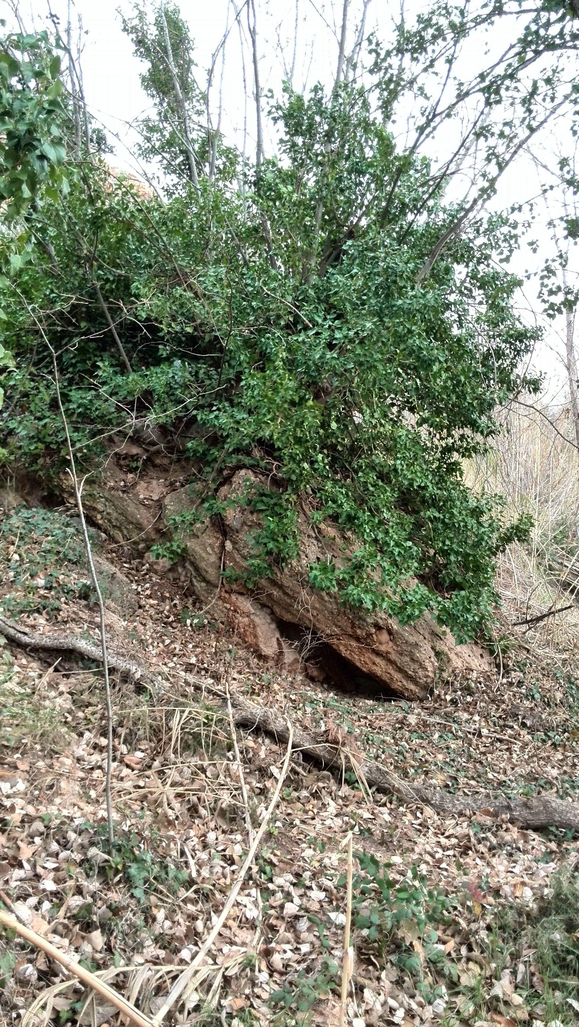 Bosque. http://www.ebroverde.es/bajo-martin/