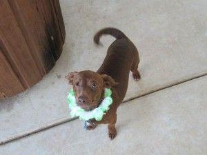Pmc Employee Pet Spotlight Winky Wonda Minton Pets Pmc Fleas
